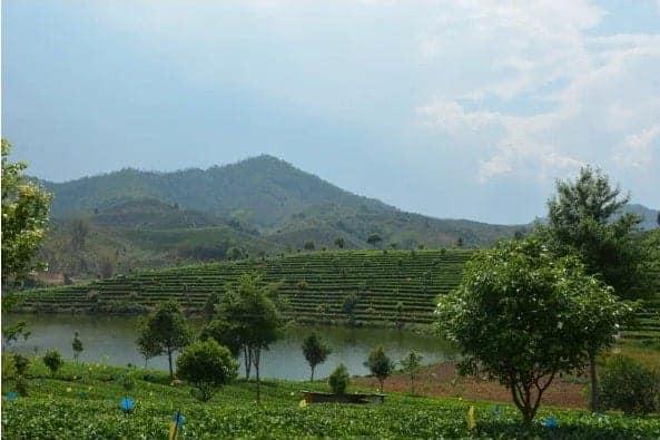Sonnentor Organic Darjeeling Black Tea, 18 tea bags